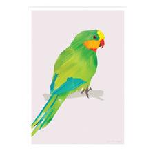 Superb Parrot Printed Wall Art