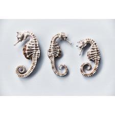 Seahorse Trio Print