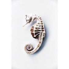 Seahorse Print Wall Art