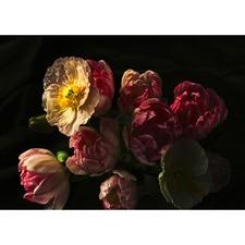 Grace Florals Canvas