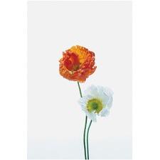 Poppy Stems Print