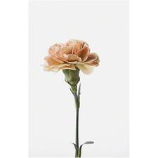 Carnation Stem I Canvas