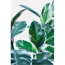 Ficus Elastica Plant Canvas