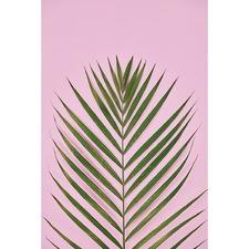 Golden Cane Palm Canvas