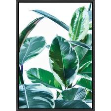 Ficus Elastica Plant Print