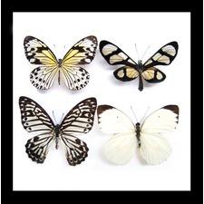 4 Assorted Butterflies Framed Wall Art