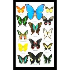 Coloured Butterfly Portrait Framed Wall Art