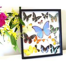 Multi-Coloured Assorted Butterflies Framed Wall Art