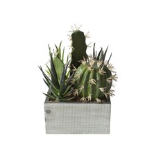 21cm Faux Cactus Collection in Wood Crate