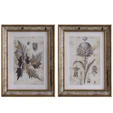 Teagan Botanical Studies Wall Art Prints (Set of 2)