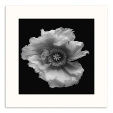 Monochrome Poppy Photographic Art Print