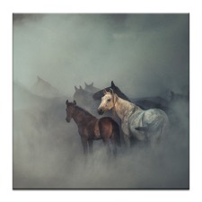The Lost Horses Photographic Art Print
