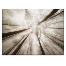Treetops Photographic Art Print