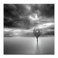 Lonely Tree Photographic Art Print