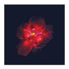 Red Dream Printed Wall Art