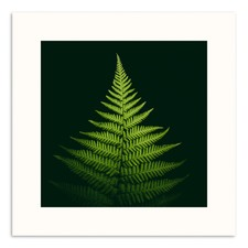 Pyramid Fern Printed Wall Art