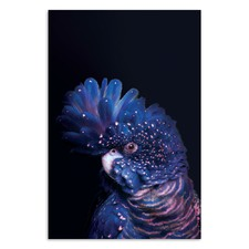 Confident Cocky on Dark Blue Printed Wall Art