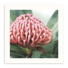 Waratah Printed Wall Art