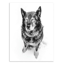 Snow Dog Printed Wall Art
