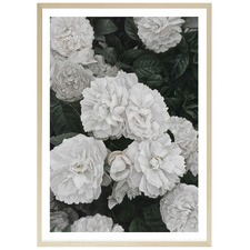 White English Roses Printed Wall Art