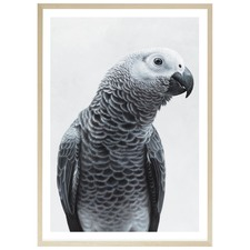 African Grey Parrot Printed Wall Art