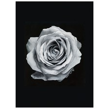 Light Silver Rose Printed Wall Art