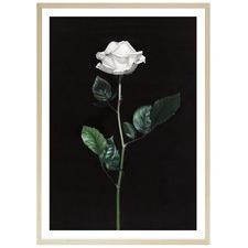 Single White Rose Printed Wall Art