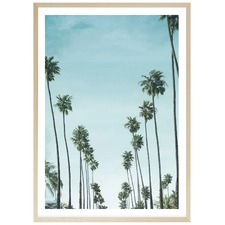 California Palms Printed Wall Art
