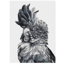 Black Cockatoo Close-Up Printed Wall Art
