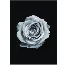 Blue Silver Rose Printed Wall Art