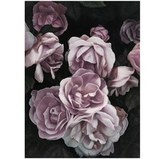 Dusty Pink Roses Printed Wall Art
