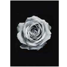 Light Silver Rose Printed Wall Art