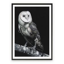 Owl Printed Wall Art