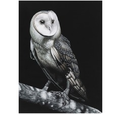 Owl Printed Wall Art
