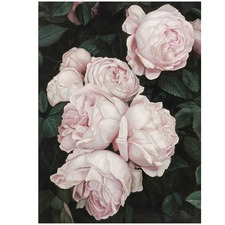 Pink Roses Printed Wall Art