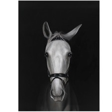 White Horse In Shadows Printed Wall Art