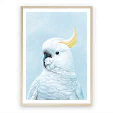 White Cockatoo In Blue Printed Wall Art