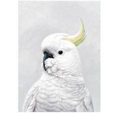 White Cockatoo Printed Wall Art