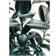 Rubber Plant Printed Wall Art