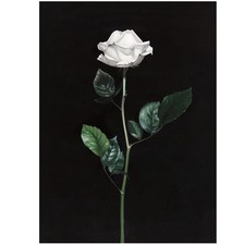 Single White Rose Printed Wall Art