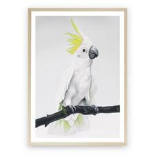 Sulphur-Crested Cockatoo Printed Wall Art