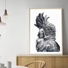 Black Cockatoo Close-Up Printed Wall Art