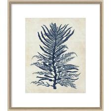 Indigo Blue Seaweed IB Framed Print