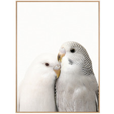 Budgie Love Framed Canvas Wall Art