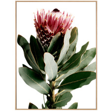 Lone Protea Framed Canvas Wall Art