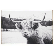 Curious Cow Framed Canvas Wall Art