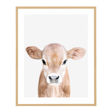Curious Calf Framed Printed Wall Art