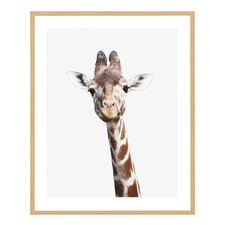Curious Giraffe Framed Printed Wall Art