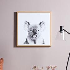 Curious Koala Framed Printed Wall Art