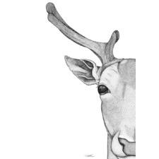Daphne the Deer Printed Wall Art